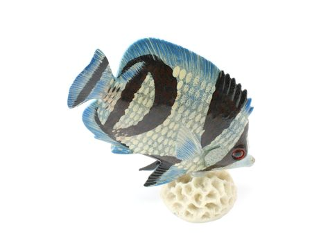 A nice tropical fish display on a white background.