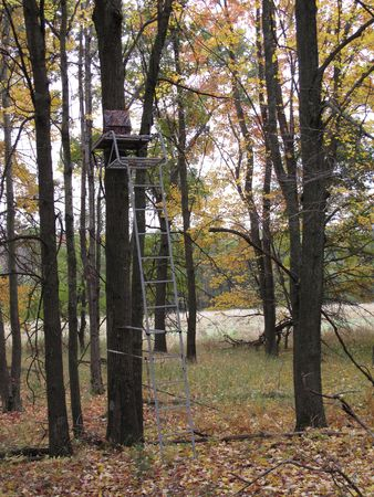 Ladder tree stand in the woods for deer hunting.  Surrounded by oaks and maples. photo