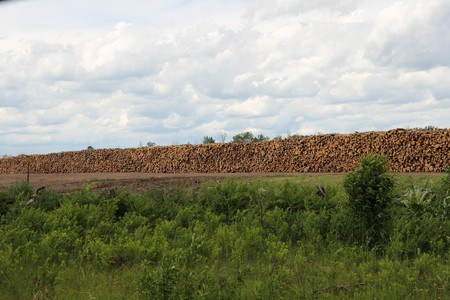 A huge stack of timber logs lined up across a field at a logging camp. Stock Photo - 7806012