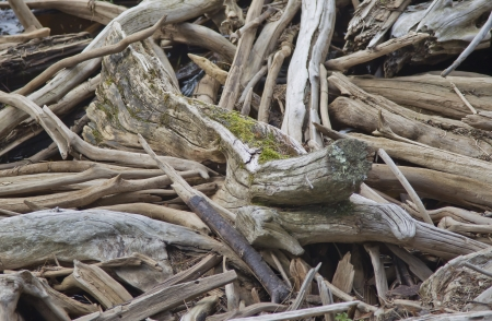 driftwood: Driftwood on the shore of a river all piled up in a tangled art llike form.