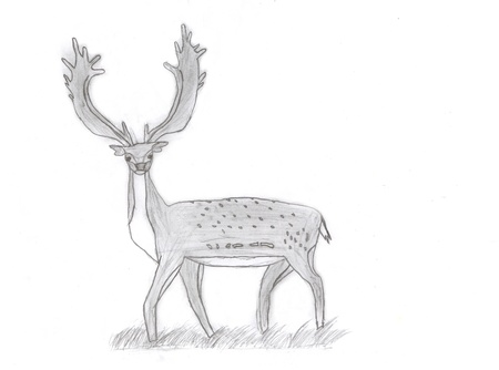 A Buck Fallow Deer (or Dama dama is scientific name) drawing by child in pencil sketch with large antlers and spots. photo