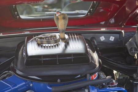 mach 1: MARION, WI - SEPTEMBER 16: Engine and cobra in 1969 Ford Mustang Mach 1 car at the 3rd Annual Not Just Another Car Show on September 16, 2012 in Marion, Wisconsin.
