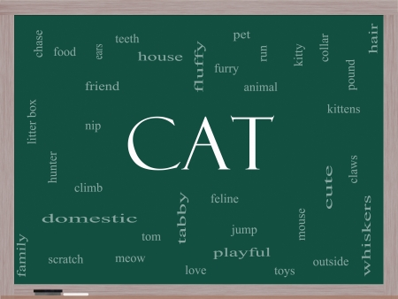 Cat Word Cloud Concept on a Blackboard with great terms such as feline, tabby, food, nip and more. Stock Photo - 17996213