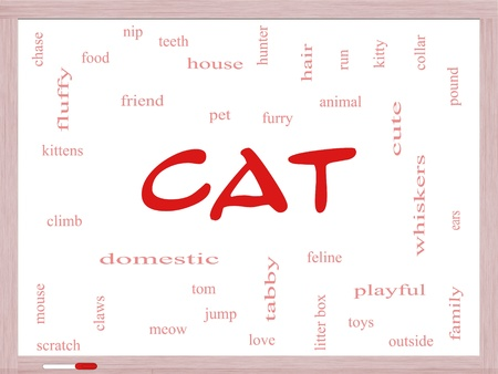 Cat Word Cloud Concept on a  Dry Erase Board with great terms such as feline, tabby, food, nip and more. Stock Photo - 17996208