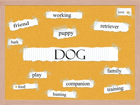 Dog Corkboard Word Concept with great terms such as puppy, friend, bark and more. Stock Photo - 17996221