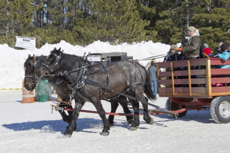 horse sleigh: EAGLE RIVER, WI - MARCH 2:  Horse Sleigh Ride in the snow at Klondike Days on March 2, 2013 in Eagle River, Wisconsin.