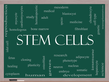 Stem Cells Word Cloud Concept on a Blackboard with great terms such as research, human, medical and more. photo