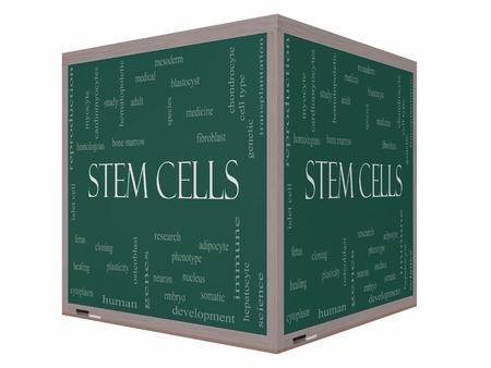 médula: Células madre Palabra Nube Concepto en una pizarra cubo 3D con los términos de la investigación, la humana, médica y mucho más.