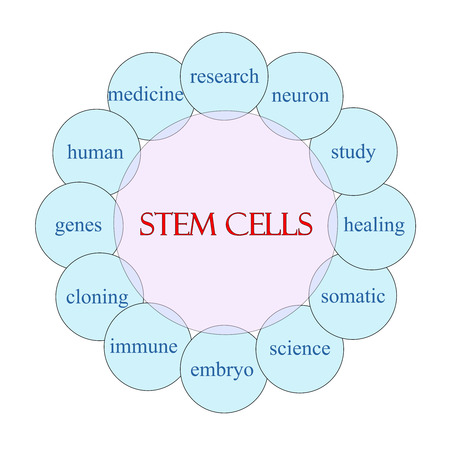 somatic: Stem Cells concept circular diagram in pink and blue with great terms such as research, neuron, study and more. Stock Photo
