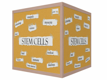 Stem Cells 3D cube Corkboard Word Concept with great terms such as research, science, genes and more. Stock Photo