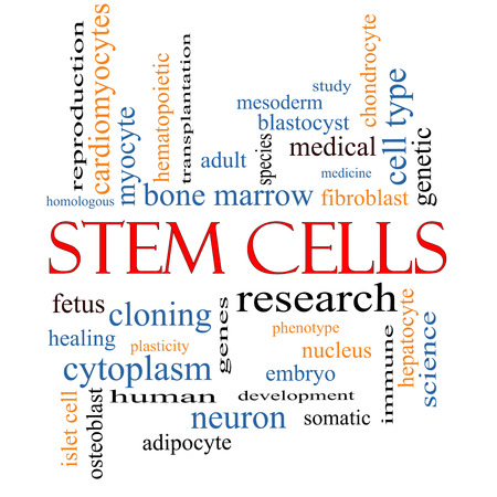 Stem Cells Word Cloud Concept with great terms such as research, human, medical and more. photo