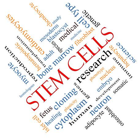 Cellules souches Word Cloud Concept incliné avec des termes tels que la recherche, humain, médical et plus. Banque d'images - 25646421
