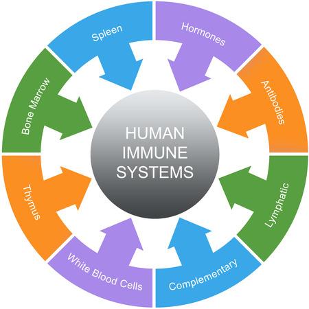 hormonen: Immuunsysteem Word Cirkels Concept met grote termen als milt, hormonen, antilichamen en meer.