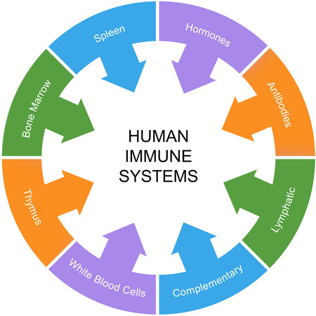immune: Immune System Word Circle Concept with great terms such as spleen, hormones, antibodies and more.