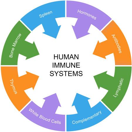 hormonen: Immuunsysteem Word Circle Concept met grote termen als milt, hormonen, antilichamen en meer.