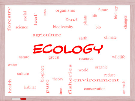 Ecology Word Cloud Concept on a Whiteboard with great terms such as green, resource, organic and more. photo