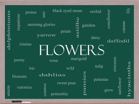 yarrow: Flowers Word Cloud Concept on a Blackboard with great terms such as rose, tulip, daisy and more. Stock Photo