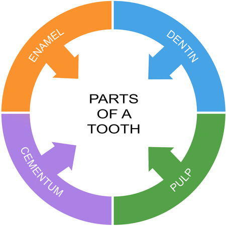 cementum: Parts of a Tooth Word Circle Concept with great terms such as enamel, dentin and more. Stock Photo
