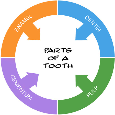 cementum: Parts of a Tooth Word Circle Concept scribbled with great terms such as enamel, dentin and more. Stock Photo