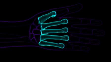 Human Skeleton Hand Matacarapls Bone Anatomy For Medical Concept 3D Illustration