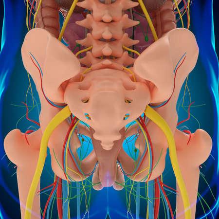 Human Anatomy For medical concept 3D Illustration Stockfoto