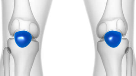 Human skeleton anatomy Patella Bone 3D Rendering For Medical Concept 版權商用圖片