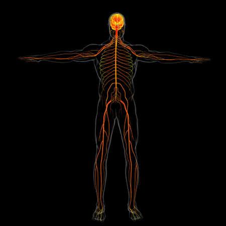 Human Brain Anatomy For Medical Concept 3D Illustration Imagens