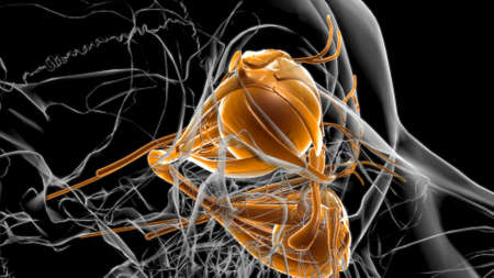 Human Eyes Anatomy For Medical Concept 3D Illustration