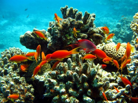 underwater fish: coral reef with shoal of fishes
