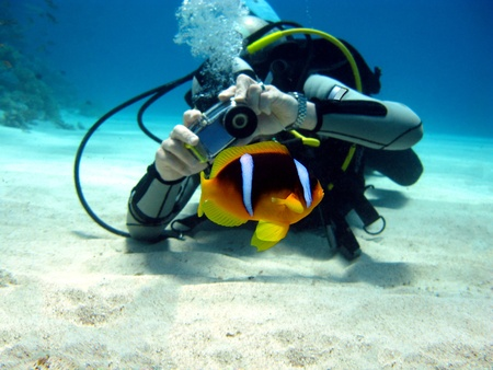 diver: diver photographer with anemon fish