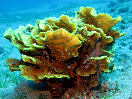 hard coral: coral reef with hard coral