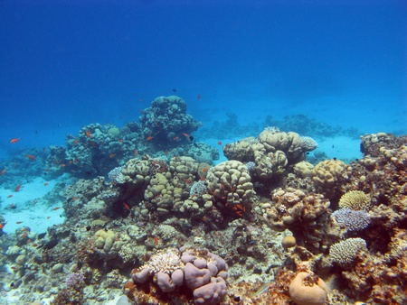 hard coral: coral reef with hard corals
