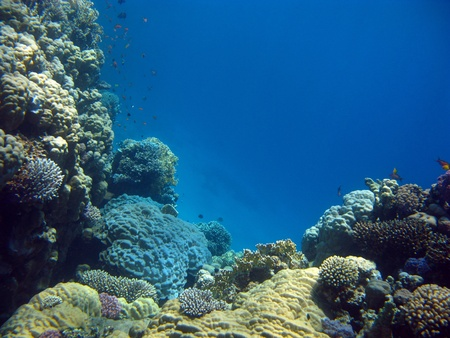 colorful coral reef with hard corals Stock Photo
