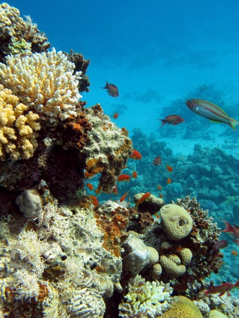 bottom of sea with coral reef