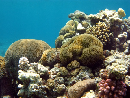 coral reef with stony corals Stock Photo