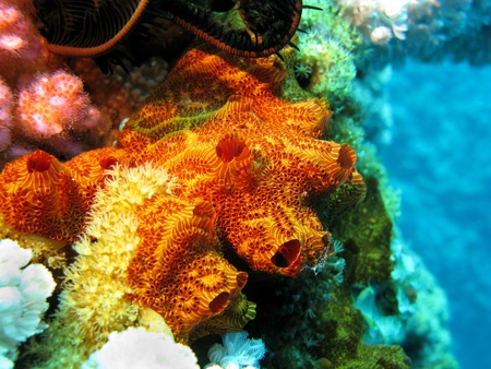 coral reef with sponge Stock Photo