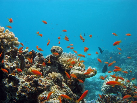 coral reef with exotic fishes photo