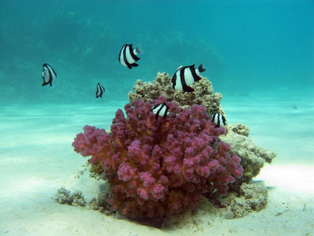 coral reef with stony coral photo