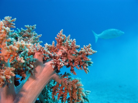 coral reef with soft coral Stock Photo