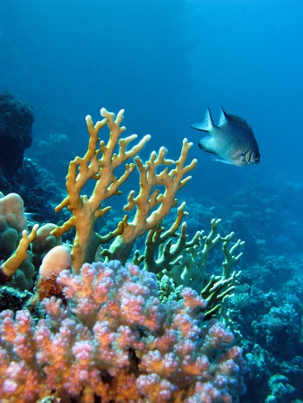 coral reef with exotic fish photo