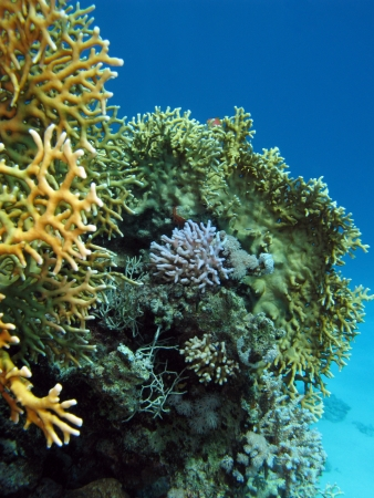 coral reef on the bottom of sea photo