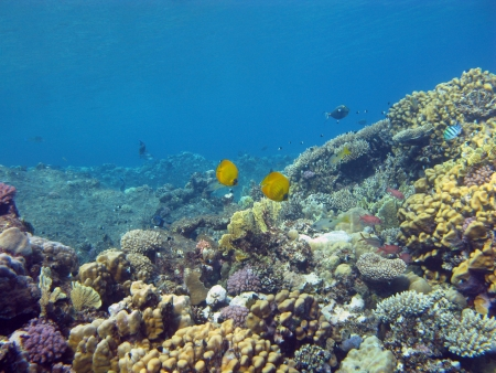bottom of red sea with coral reef photo