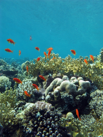 coral reef with exotic fishes Stock Photo - 14607321