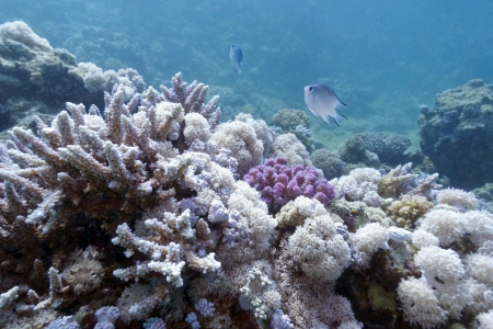 coral reef on the bottom of red sea photo