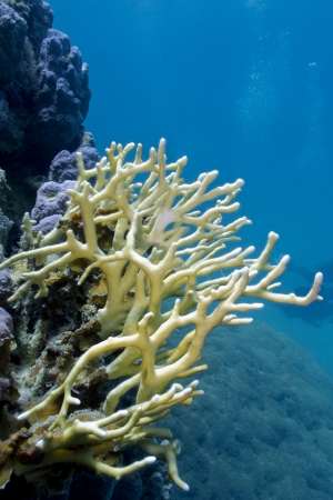 coral reef with stony coral Stock Photo