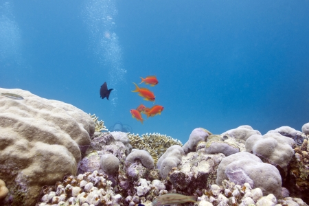 coral reef with hard corals and exotic fishes photo