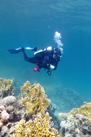 girl diver under coral reef in red sea photo