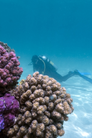 scuba diver girl and coral reef on the bottom of red sea