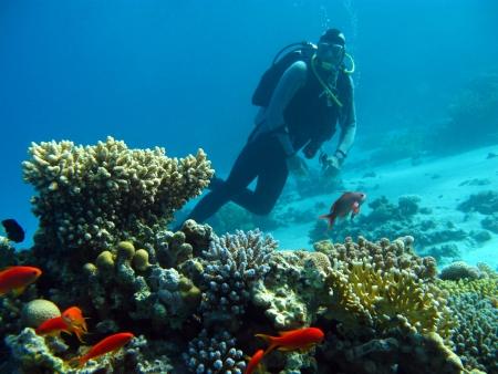 mergulhador de mergulhador acima do recife coral no Mar Vermelho