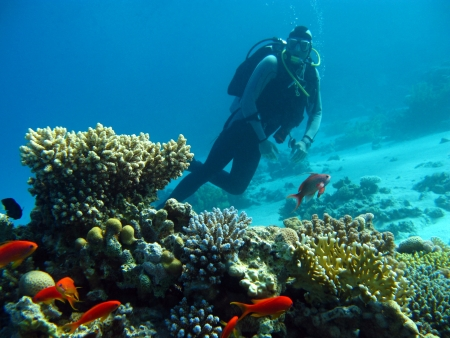 scuba diver above coral reef in red sea photo